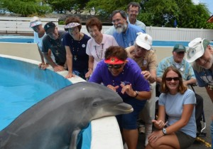 Dolphin Aloha Touch and Feed Oahu Hawaii