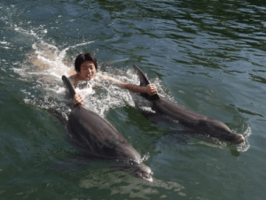 Swimming with the Dolphins Florida Keys