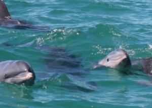 Wild Dolphin Encounter Key West Florida