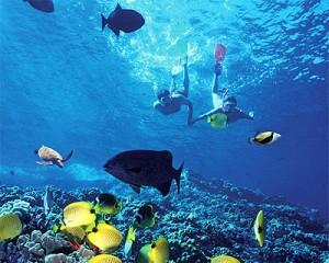 Dolphins and Snorkeling in the Florida Keys Key Largo Islamorada