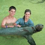Sealion Swim Florida Keys