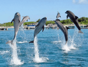 Swim with the Dolphins Cancun / Isla Mujeres Dolphin Swim programs