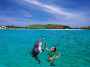 swimming with dolphins nassau paradise island bahamas