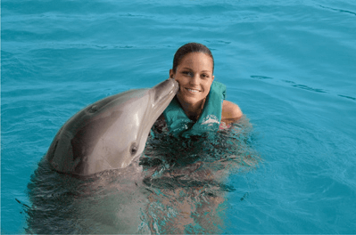 Dominican Republic dolphin swims