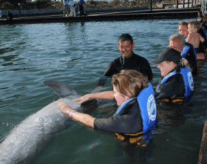 Los Cabos Dolphin Encounter Non Swim