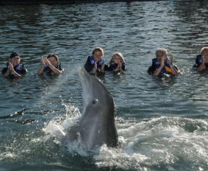 Los Cabos Dolphin Programs