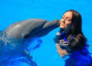 Los Cabos Dolphin Swim Mexico