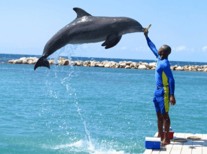 Negril and Montego Bay Dolphin Programs
