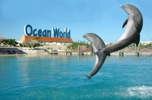 Swim with Dolphins Puerto Plata