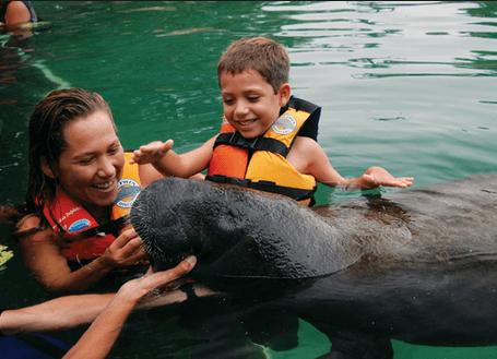 Playa Del Carmen Riviera Mayan Dolphins Manatees