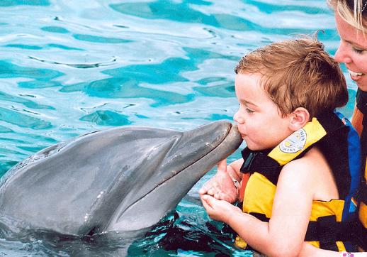Puerto Vallarta Dolphin Encounter Non Swim