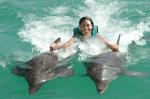 puerto plata dolphin programs