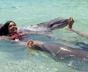 Bahamas Royal Dolphin Swim