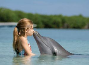 virgin island dolphin swim