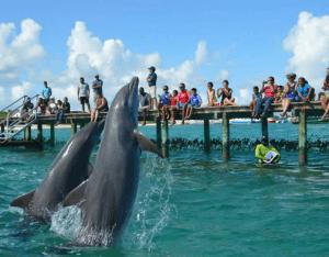 Anguila St Martin Dolphin Programs
