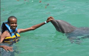 Anguila St Martin Dolphin Encounter Non Swim