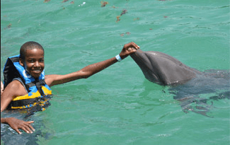 Anguila St Martin Dolphin Encounter Non Swim