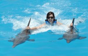 Playa DelCarmen Maya Riviera Dolphin Royal Swim