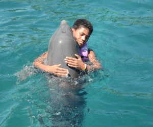 dominican republic dolphin swim
