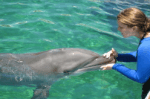 swimming with dolphins in miami