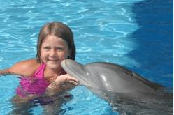 Panama City Beach Dolphin Encounter