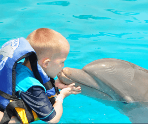 Puerto Vallarta Dolphin Swim Mexico