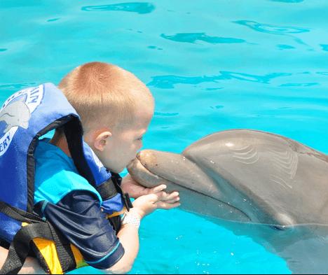 Puerto Vallarta Dolphin Swim