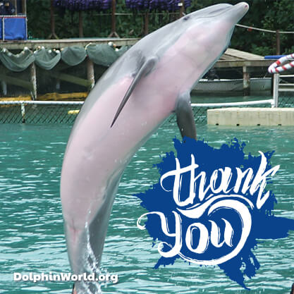 Dolphin World Thank you!