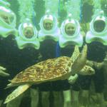 Underwater Sea Trek Miami FL