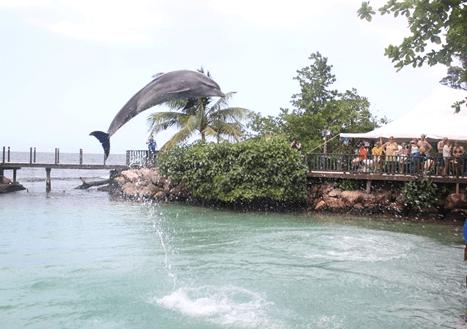 Ocho Rios Dolphin Programs Awaits You!
