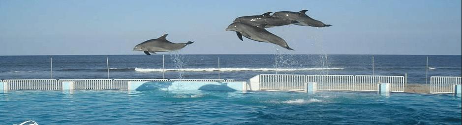 Dolphin Park St Augustine Beach FL