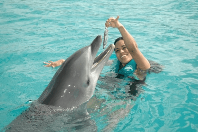 swim with dolphins puerto plata dominican republic