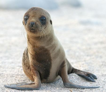A Cute Sea Lion Pup