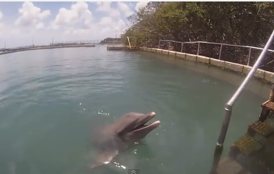 swimming with Dolphins Tortola