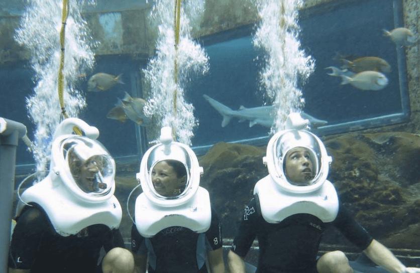 Shark Encounter Sea Trek