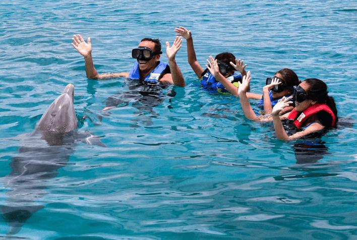 Dolphin Interaction Program in Oahu Hawaii