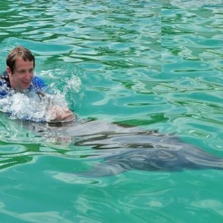 swim with dolphins Miami Florida