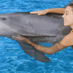 One on One with Dolphin Mexico