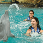 Splash time with dolphin Mexico