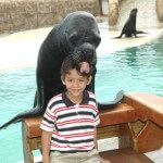 Sea Lion Encounter Puerto Plata Little Boy