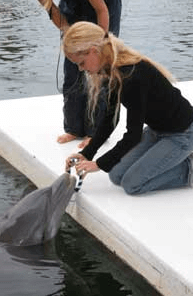 Dolphin Engagement Preparation in the Florida Keys