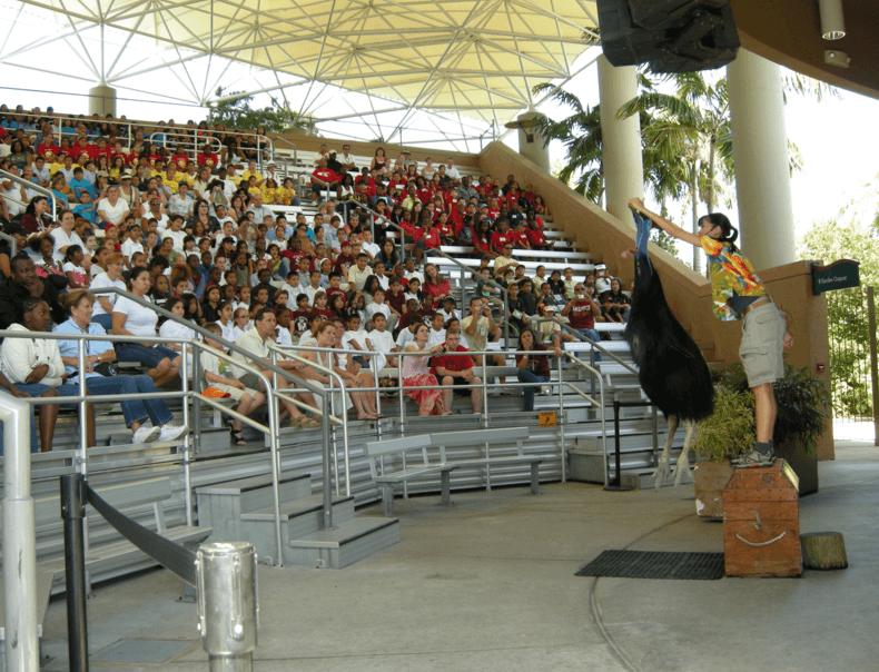 Bird show Miami FL