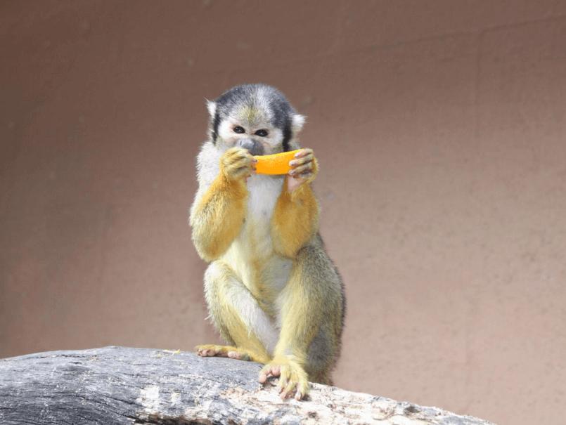 Monkey Miami FL