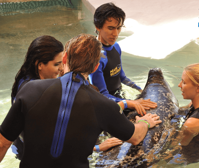 Belly Rub Seals Miami FL