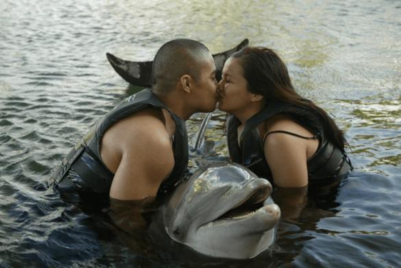 Dolphin Proposal Florida Keys