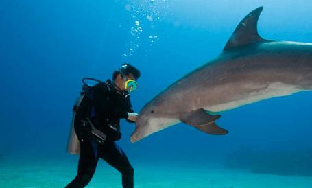 Marine Biology Career Florida more
