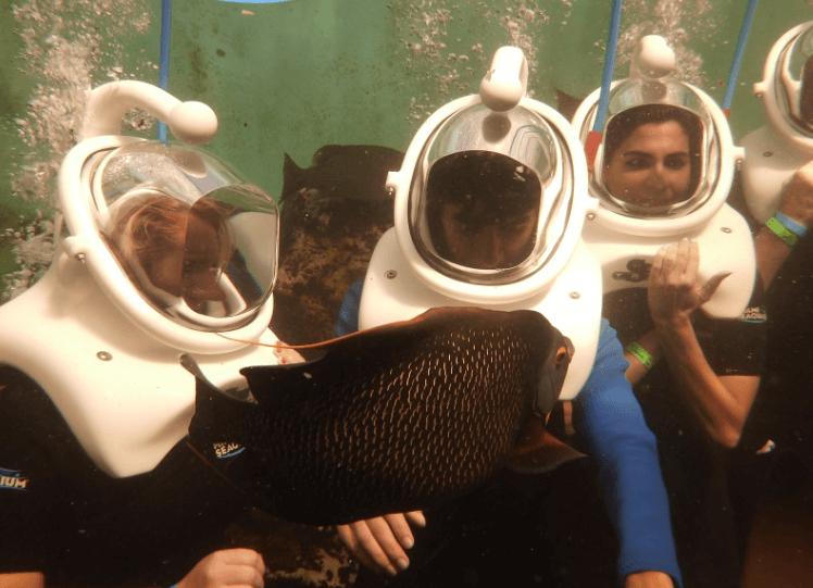 Angel Fish Sea Trek Miami FL