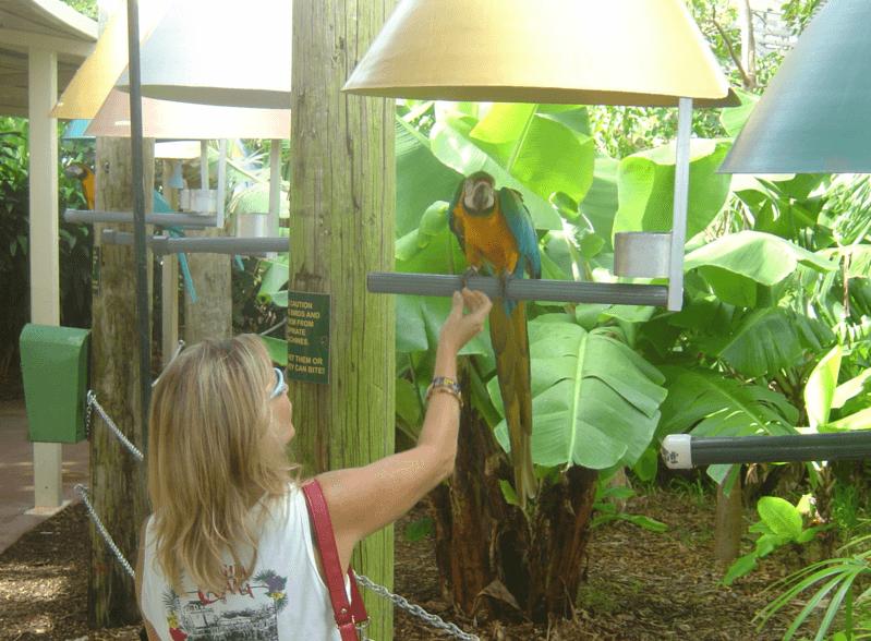 Feeding the birds Miami FL