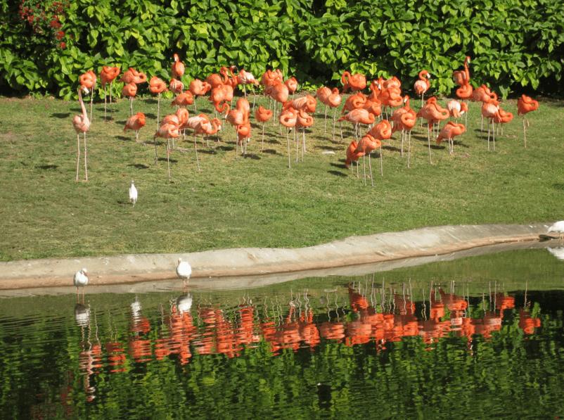 Flamingos Miami FL