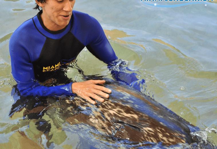 Let go Seal Swim Miami FL